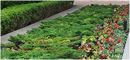 commercial building garden