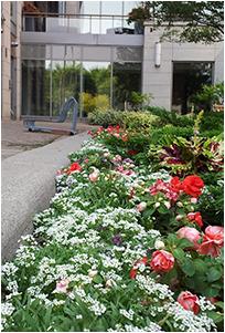 flower garden from side of building