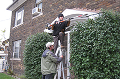 Two garden maintenance experts trimming the bushes