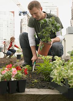 Man Planting Green Roof