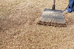Raking Dethatched Spring Grass